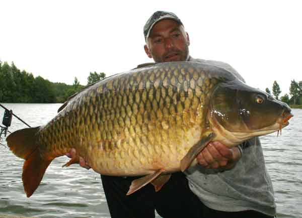 A large Carp, do you complain?