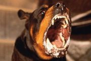 Hatred is the rabid dog that turns on its owner.