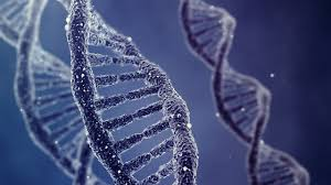 The DNA of God in us